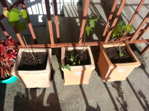 3 little lanterns - now in the east side