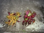 Last year - carrots and beets