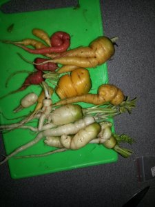 Last years carrots