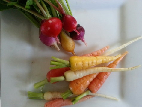 Radish and carrots - these did not make it to the foyer