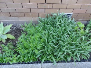 Cornflowers next to Linaria
