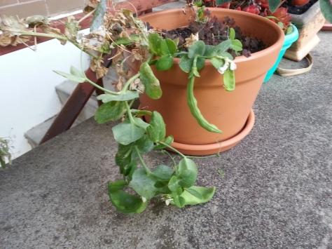 Poor little plant