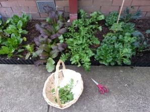 I love my 'Harvest Basket'
