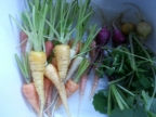 Carrots and radishes in the foyer