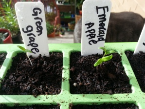 I will 'thin' them out in about 1 week by cutting the weakest seedling off (dont try to pull them out - you will damage both!)