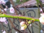 Bugs on the Buds
