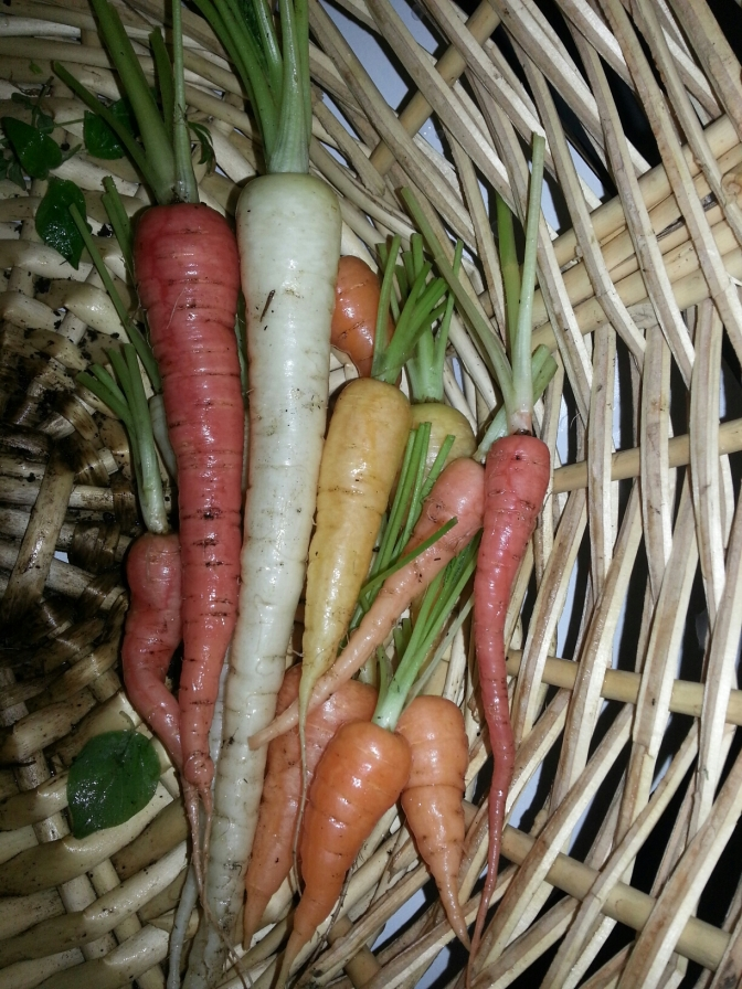Best Carrots Yet
