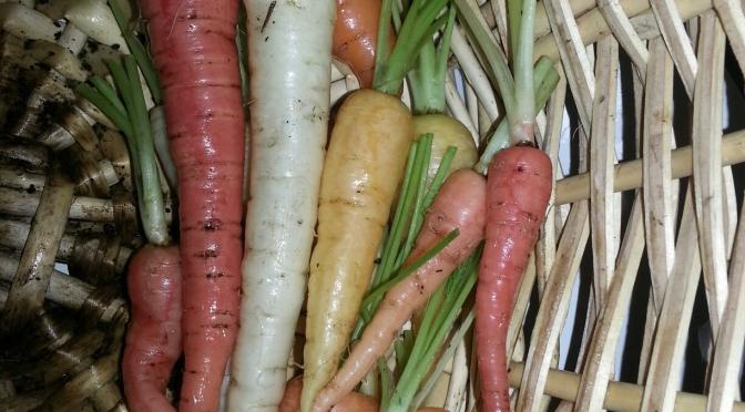 Best Carrots Yet